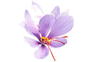 Krocus Kozanis organic greek red saffron antioxidant herbal teas